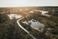 沼泽的很多湖在日落在夏天 Kemeru拉脱维亚 免版税库存照片