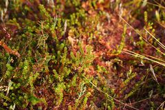 沼泽的植物群 库存图片
