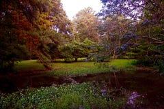沼泽的池塘 库存照片