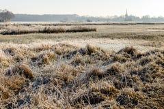 沼泽的荷兰风景在冬天 库存照片