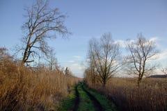 沼泽的路通过沼泽地 免版税库存图片