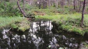 沼泽的高定义英尺长度在森林里 股票录像