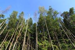 沼泽结构树/森林 库存照片