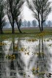 沼泽结构树 免版税库存照片