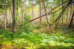沼泽绿色富有的森林 免版税库存图片