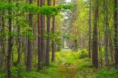 沼泽绿色富有的森林 库存图片
