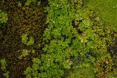 沼泽花和青苔 免版税库存照片