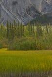 沼泽草、北方森林和落矶山Muncho湖的 库存图片