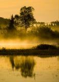 沼泽薄雾早晨结构树 免版税图库摄影