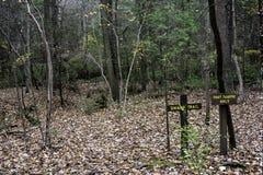 沼泽足迹在森林 免版税库存照片