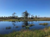沼泽风景佛罗里达 库存图片