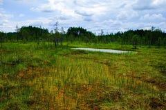 沼泽风景的湖 库存照片