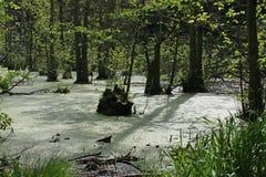 沼泽风景,鲁根岛小岛  免版税库存图片
