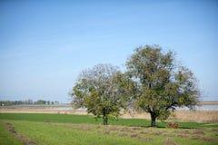 沼泽风景, Carska近Bara到兹雷尼亚宁塞尔维亚 免版税库存照片