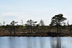 沼泽风景 库存照片