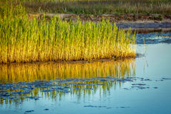 沼泽风景 免版税图库摄影