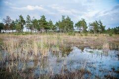 沼泽,爱沙尼亚 库存照片