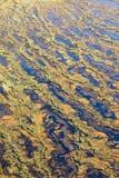 沼泽,顶视图 免版税库存图片