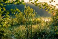 沼泽绿叶 免版税库存图片