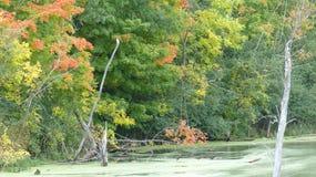 沼泽&树在秋天 免版税库存照片
