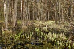 沼泽 防御cesky遗产krumlov季节春天查看世界 库存照片