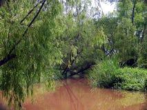 沼泽 库存照片