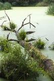 沼泽 免版税图库摄影