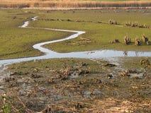 沼泽 免版税库存图片