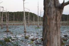 沼泽 图库摄影