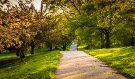 沿一串足迹的五颜六色的树在督伊德教憎侣小山在巴尔的摩, Ma停放 图库摄影