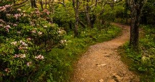 沿一串足迹的山月桂在Shenandoah国家公园 免版税库存照片