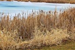 沿一家池塘银行的仓促在春天 库存照片