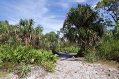 沿一条含沙绞的道路的密集的森林 库存图片