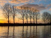 沿一条宽水路的结构树 免版税库存图片