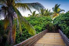 沿一条木板走道的棕榈树在歌手海岛,佛罗里达 图库摄影