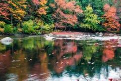 沿一条河的惊人的秋叶在新英格兰 免版税库存图片
