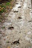 沿一条泥泞的路的边的麋轨道 库存图片