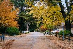 沿一条街道的秋天颜色在圣Michaels,马里兰 库存图片