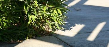 沿一条被遮蔽的道路的低竹子 免版税库存照片