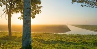 沿一条运河的树通过在日出的一个有薄雾的领域在秋天 免版税库存图片