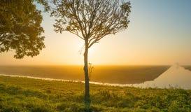 沿一条运河的树通过在日出的一个有薄雾的领域在秋天 免版税库存照片