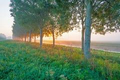 沿一条运河的树通过在日出的一个有薄雾的领域 免版税库存照片