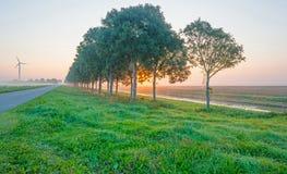 沿一条运河的树通过在日出的一个有薄雾的领域 免版税库存图片