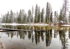 沿一条绞的爱达荷河的积雪的森林 免版税图库摄影