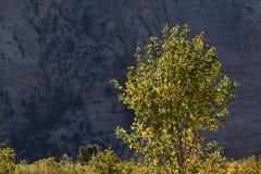 沿不可靠的连接器足迹的强烈的早晨阳光, Kolob大阳台,锡安国家公园,犹他 库存图片