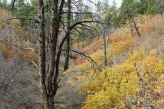 沿东方外缘足迹的秋天颜色,锡安国家公园,犹他 免版税库存图片