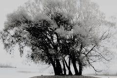沿休伦湖的黑白树 免版税库存照片