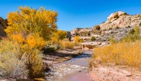 沿佛瑞蒙河的秋天 库存图片