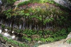 沿公牛小河的蕨和青苔洞穴 免版税库存照片