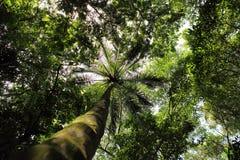 沿加勒比海的热带森林 免版税库存图片